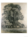 Elm Trees in Old Hall Park, East Bergholt, 1817 Giclee Print by John Constable