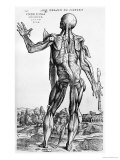 "Anatomical Study, Illustration from ""De Humani Corporis Fabrica"", 1543 Reproduction procédé giclée par Andreas Vesalius"