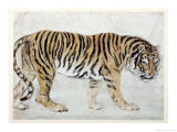 Tiger Giclee Print by Edwin Henry Landseer