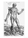 "Anatomical Study, Illustration from ""De Humani Corporis Fabrica"", 1543 Giclee Print by Andreas Vesalius"