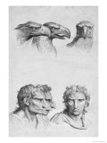 Similarities Between the Head of an Eagle and a Man Giclee Print by Charles Le Brun