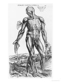 "Anatomical Study, Illustration from ""De Humani Corporis Fabrica"", 1543 Premium Giclee Print by Andreas Vesalius"