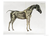 "Third Anatomical Table, from ""The Anatomy of the Horse"" Giclee Print by George Stubbs"
