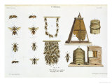 """Bees and Bee-Keeping, from """"The Young Landsman,"""" Published Vienna, 1845 Premium Giclee Print by Matthias Trentsensky"""