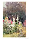 Roses trémières Reproduction procédé giclée par Helen Allingham