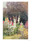 Hollyhocks Giclee Print by Helen Allingham