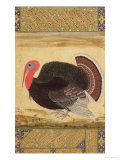 A Turkey-Cock, Brought to Jahangir from Goa in 1612, from the Wantage Album, Mughal, circa 1612 Giclee Print by Ustad Mansur