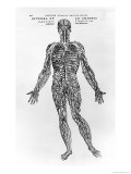 Veins and Arteries System Giclée-Druck von Andreas Vesalius