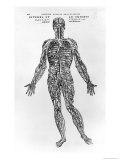 Veins and Arteries System Giclée-Druck von Andreas Vesalius