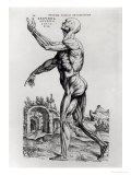 Musculature Structure of a Man Premium Giclee Print by Andreas Vesalius