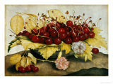 Cherries and Carnations Impresso gicle por Giovanna Garzoni