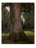 Study of the Trunk of an Elm Tree, circa 1821 Giclee Print by John Constable