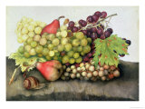 Snail with Grapes and Pears Giclee Print by Giovanna Garzoni