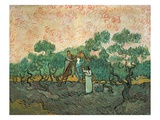 The Olive Pickers, Saint-Remy, 1889 (Oil on Canvas) Giclee Print by Vincent van Gogh