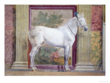 Sala Dei Cavalli, Detail Showing Portrait of a Grey Horse from the Stables of Ludovico Gonzaga III Giclee Print by Giulio Romano