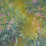 Iris Reproduction procédé giclée par Claude Monet