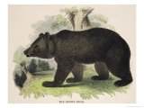 The Brown Bear, Educational Illustration Published by the Society for Promoting Christian Knowledge Reproduction proc&#233;d&#233; gicl&#233;e par Josiah Wood Whymper
