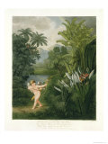 "Landscape with Cupid Aiming an Arrow at a Parrot or Queen Flower, from ""The Temple of Flora"" Giclee Print by Philip Reinagle"
