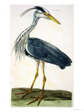 "The Heron Plate from ""The British Zoology Class II: Birds"" Giclee Print by Peter Paillou"