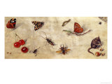 A Study of Various Insects, Fruit and Animals Giclee Print by Jan van Kessel