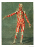 Superficial Muscular System of the Front of the Body Giclee Print by Arnauld Eloi Gautier D&#39;agoty
