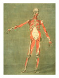 Deeper Muscular System of the Front of the Body Giclee Print by Arnauld Eloi Gautier D'agoty