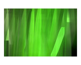Painted Green Reeds Photographic Print by Harveys Digital Paint