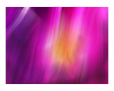 Purple Photographic Print by Harveys Digital Paint