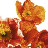Poppies II Posters by Richard Weinstein