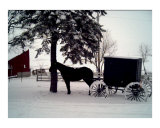 Amish Horse and Buggy in Winter Photographic Print by Darlene Navor