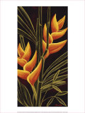 Heliconia Prints by Yvette St. Amant