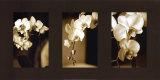 Exotische Blüten Kunstdruck von Cinzia Ryan