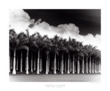 White Palms, Costa Rica Print by Monte Nagler