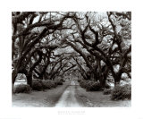 Path in the Oaks II, Louisiana Print by Monte Nagler