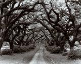 Weg durch den Eichenwald II, Louisiana Kunst von Monte Nagler