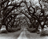 Path in the Oaks II, Louisiana Poster by Monte Nagler