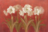 White Amaryllis on Red Poster by Danhui Nai