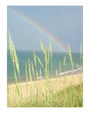 Rainbow Photographic Print by TAMMY LUTKE