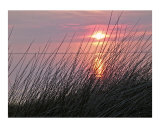 Grass, Sunset Photographic Print by Frank Tozier