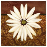 White Daisy Prints by Tamara Wright