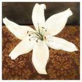 White Lily Posters by Tamara Wright