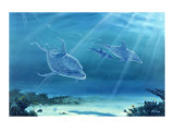Atlantic Bottlenose Dolphin Giclee Print by Bill Northup
