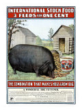 International Hog Swine Feed Giclee Print