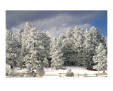 Morning Snow 6366 Photographic Print by Vic Harshberger
