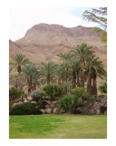 Ein Gedi Spa - Dead Sea area, Israel Photographic Print by Jim Stanfield