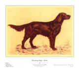 Hunting Dogs, Setter Prints by Andres Collot
