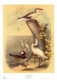 Coastal Dwellers II Poster par Horace Steele
