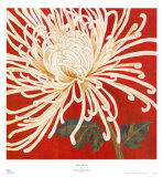 Spider Mum II Prints by Judy Shelby