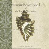 Seashore Life Affiches par Paula Scaletta