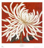 Spider Mum I Posters by Judy Shelby